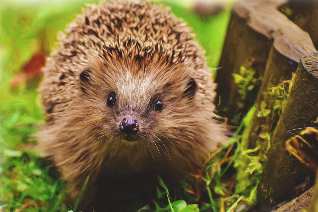 hedgehog friendly homes need to be built